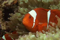 Indahnya Taman Laut Pangandaran