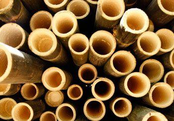 Saatnya Bambu di Maksimalkan Untuk Kesejahteraan Masyarakat