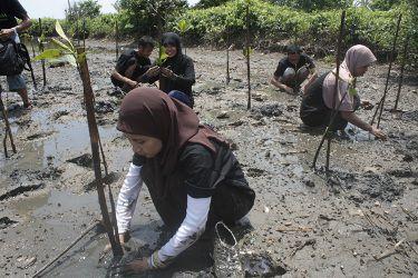 Ayo, Berwisata Sekaligus Rehabilitasi Mangrove di Pangandaran