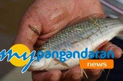 Banjir Surut, Berkah Bagi Para Pemancing