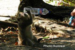 Bocah Duel dengan Monyet
