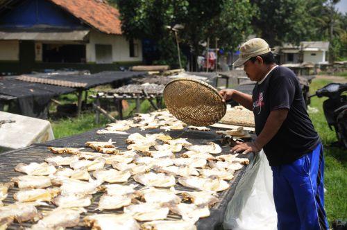 Cuaca Cerah, Pengrajin Ikan Asin manfaatkan Jemur Ikan
