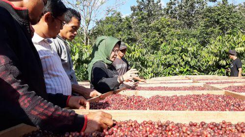 Kadin, Bank Indonesia dan BDC Pangandaran Berikan Rangkaian Pelatihan Kopi