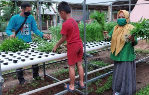 Kadin Dorong Optimalisasi Bisnis Hidroponik di Pangandaran