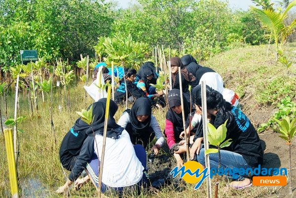 Kegiatan Pembibitan Mangrove dan Pandan Laut