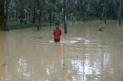 Korban Banjir Cimerak Masih Mengungsi