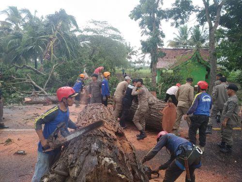 Membahayakan Pengguna Jalan,  Pohon Besar di Wonoharjo di Tebang Tagana Kab Pangandaran