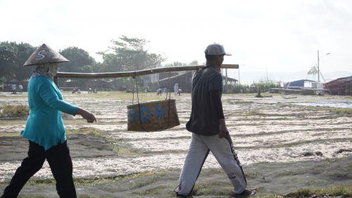 Musim Dingin, Nelayan Pangandaran Panen Ikan Layang