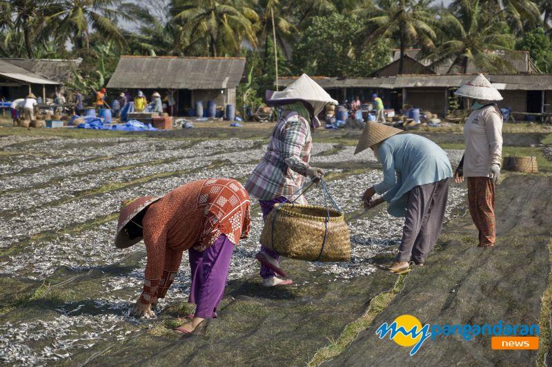 Musim Kemarau, Ikan Melimpah di Pangandaran