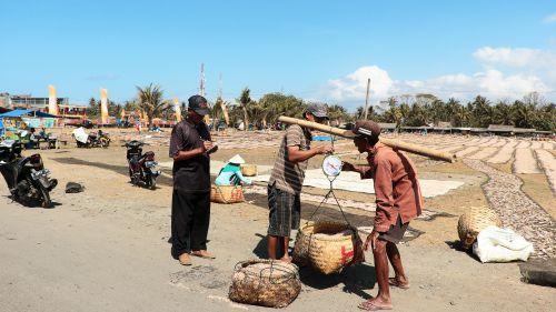 Nelayan di Pangandaran Panen Udang Rebon