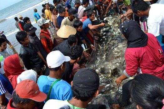 Nelayan Jaring Arad Pangandaran Panen Ikan
