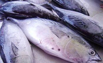 Nelayan Pangandaran Libur Melaut, Harga Ikan di Bandung Naik