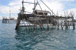 Nelayan Pangandaran Panen Rebon