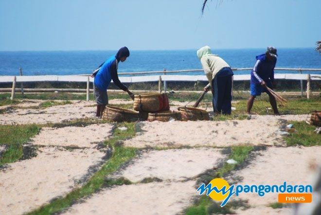 Nelayan Pangandaran Panen Udang Rebon