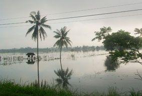 Padi di Padaherang Terendam Banjir