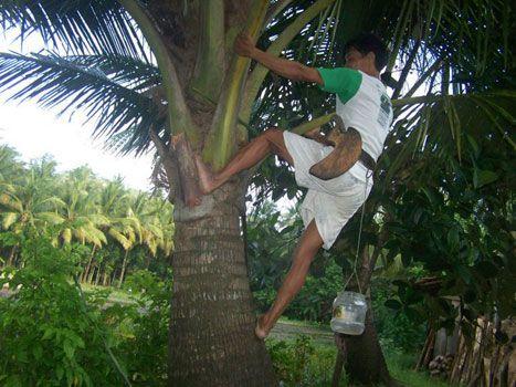 Penyadap Nira Jatuh dari Pohon Kelapa