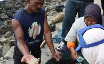 Ubur-ubur Ganggu Kenyamanan Mencari Ikan Nelayan