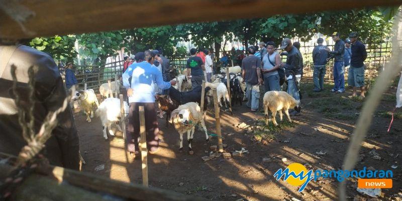 Unik! Pasar Domba di Cijulang Warga Pangandaran Banyak Yang Belum Tahu