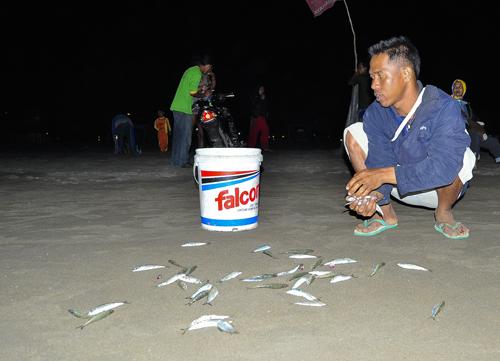 Warga Pangandaran Panen Ikan Layang